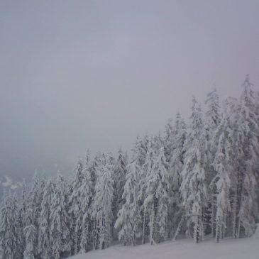 Зимна фантазия