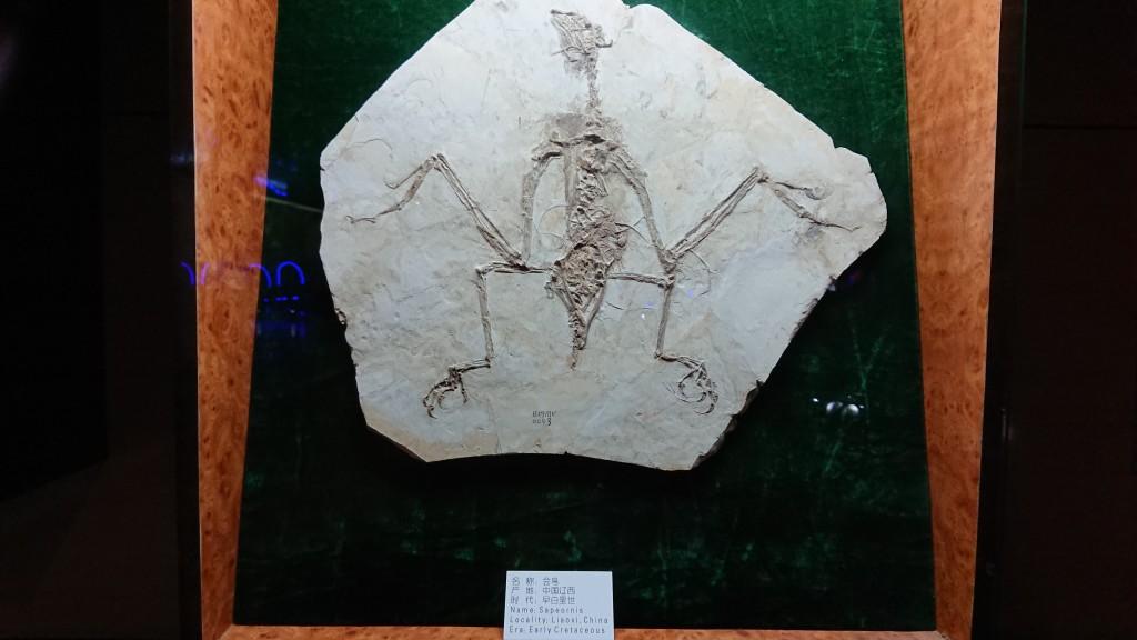 Ляонин. Геоложки музей Бънси. Фосил